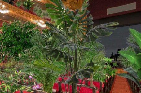 Bitkiler Önce Operaya, Sonra Sağlık Çalışanlarına