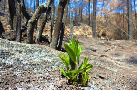 Doğanın Canlanması